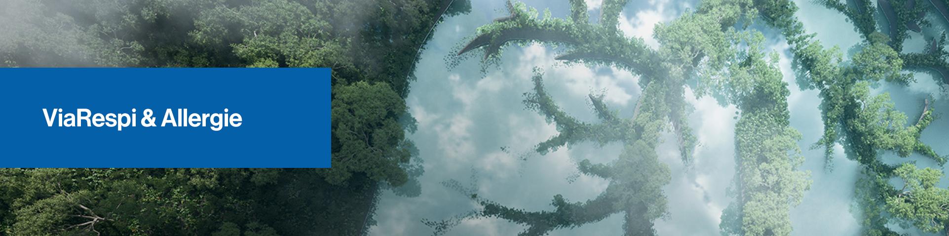 Une forêt vue d'en haut